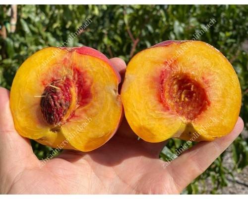 Pfirsich (Prunus persica) CANADIAN HARMONY