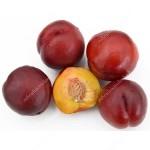 Nektarinka (Prunus persica var. nucipersica) HARCO