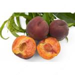 Pfirsich (Prunus persica) ROYAL GEM