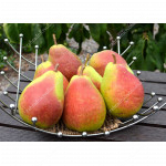 Pear SAXONIA™ GERBURG®