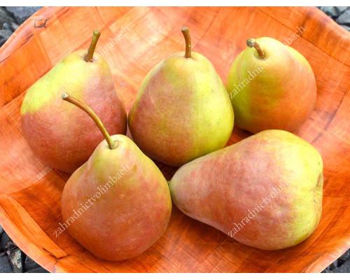 Pear SAXONIA™ Gräfin Gepa®
