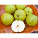 Apple Pear HAYATAMA