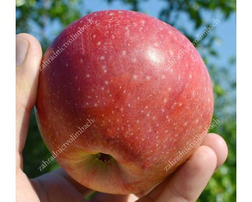 Jabloň (Malus domestica) REANDA®
