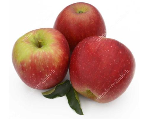 Apfel (Malus domestica) REBELLA®