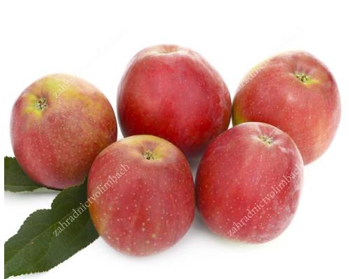 Apfel (Malus domestica) RESI®