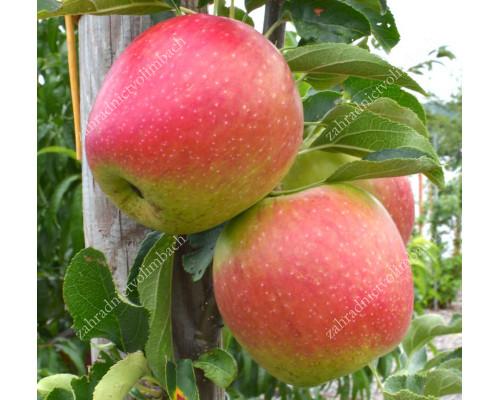Apfel (Malus domestica) RETINA®