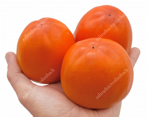 ROJO BRILANTE Asian Persimmon