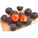Apricot x Plum hybrid MELITOPOLSKI CHERNY