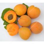 Aprikose (Prunus armeniaca) MINO (S)