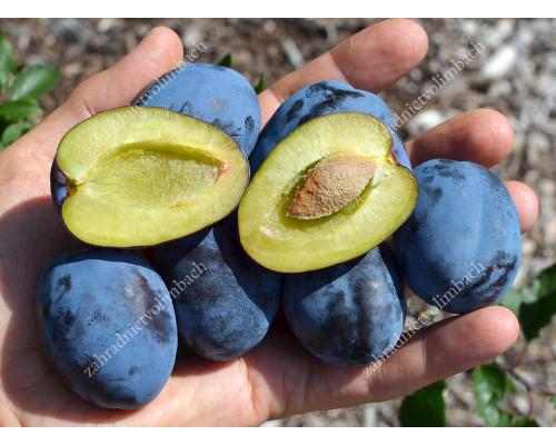 Pflaume (Prunus domestica) TOPFIRST®