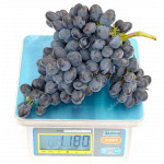 KISHMISH REBEKKA® Disease Resistant Seedless Table Grape Vine