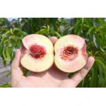 Broskyňa (Prunus persica) BENEDICTE