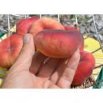 Flat Peach (Prunus persica) FILIP