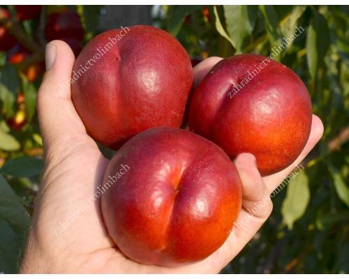 Nektarine (Prunus persica var. nucipersica) FLAVOURTOP