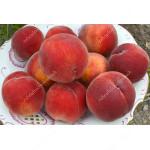 Broskyňa (Prunus persica) HARNAS