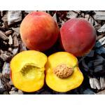 Peach (Prunus persica) HARNAS