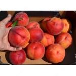 Pfirsich (Prunus persica) JAYHAVEN