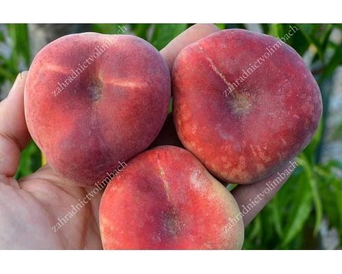 Broskyňa plochá (Prunus persica) MONICA