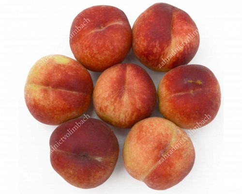 Peach (Prunus persica) CAMPANILO - Columnar Tree