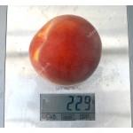 Broskyňa (Prunus persica) SYMPHONIE