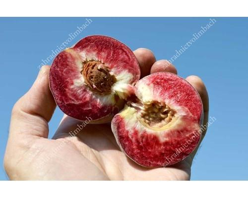 "Pfirsich (Prunus persica) ""Roter Weinbergpfirsich"""