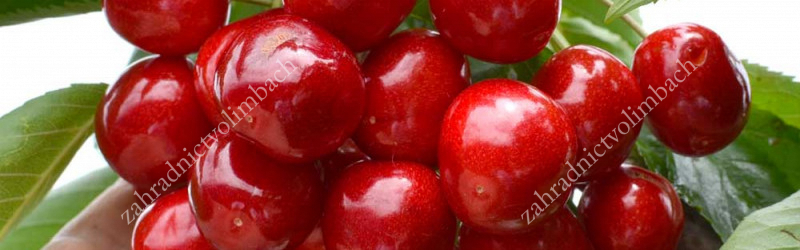 Cherry and Sour Cherry Ripening Chart