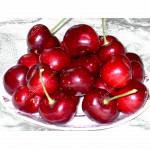 Čerešňa (Prunus avium) KRUPNOPLODNAJA