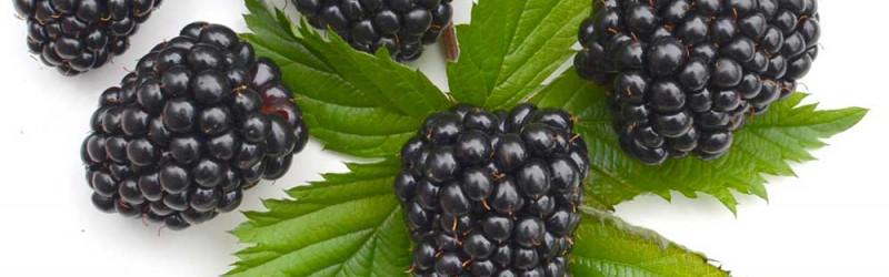 Summer fruits for health and beauty