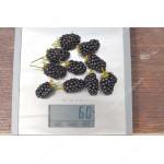 Blackberry (Rubus fruticosus) RUCZAJ®
