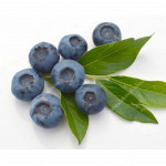 Blueberry (Vaccinium corymbosum) BLUEGOLD