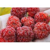 Che, Chinese Mulberry, Mandarin Melon Berry