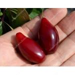 Cornelian Cherry Dogwood (Cornus mas) LUKYANOVSKY