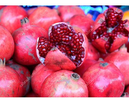 Granátové jablko (Punica granatum) HICAZ