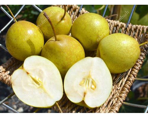 Hruška (P.communis x P. pyrifolia) BENITA®