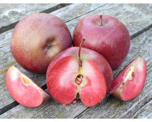 Apple BAYA® Marisa