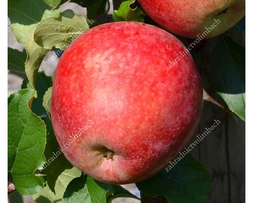 Apple REWENA®