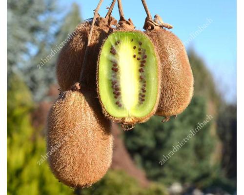 Kiwi (Actinidia deliciosa) JENNY
