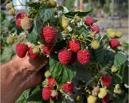 Raspberry HIMBO-TOP®