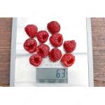 Raspberry (Rubus idaeus) RUBYFALL®