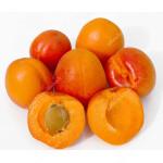 Marhuľa (Prunus armeniaca) RARES