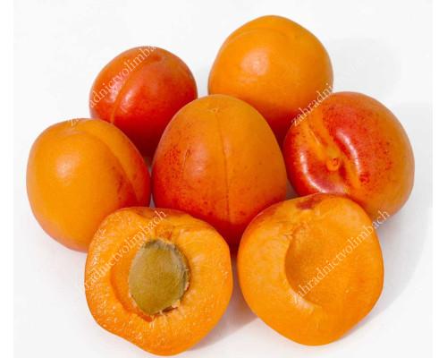Aprikose (Prunus armeniaca) RARES