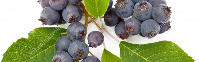 Saskatoon Berry Cultivation and maintenance