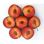 Apricot x Plum hybrid GLOBUS