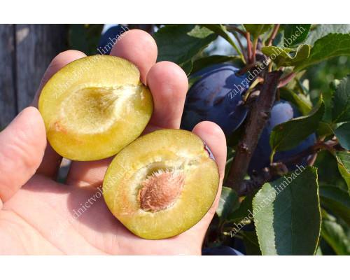 Pflaume (Prunus domestica) JUNA®
